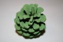 Conuri de brad, verde, pret per buc; VANDUTE