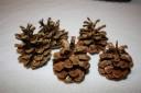 Conuri de brad medii, aurite cu glitter si lacuite pentru rezistenta, 6-7 cm; VANDUTE