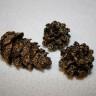 Conuri de brad mici, aurite cu glitter si lacuite pentru rezistenta, 3-4 cm; VANDUTE